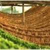 129-Trakya'daki tütün üreticilerinin desteklenmesi